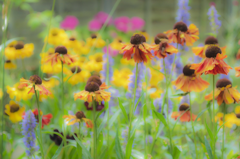 Heleniums – 7 lovely things for the weekend at https://ellasplace.co.uk