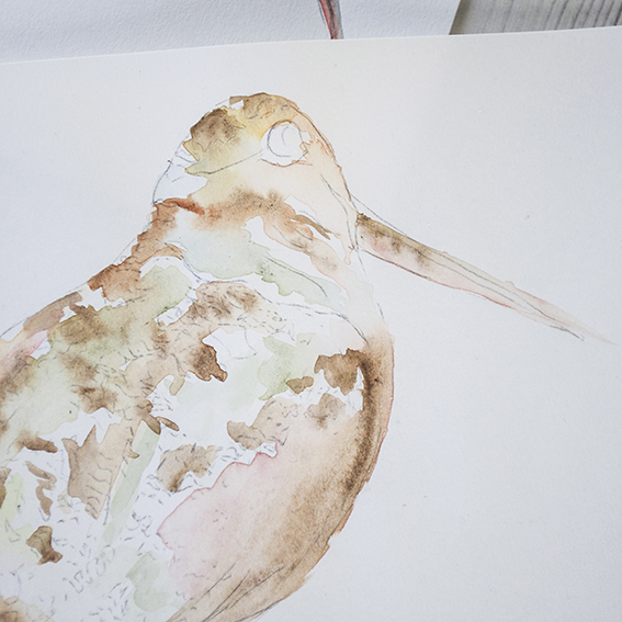 Watercolour by Ella Johnston