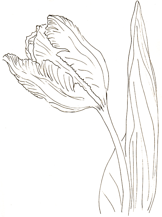 Flower of the fortnight. Quick sketch Tulip (c) Ella Johnston ellasplace.co.uk