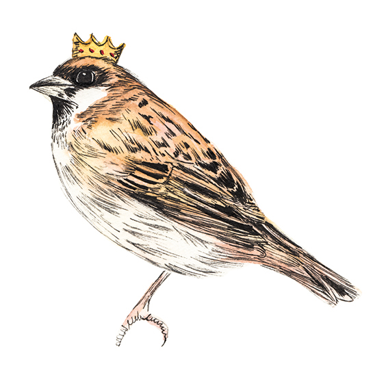 King Sparrow. Illustration Commission. Ella Johnston. ellasplace.co.uk