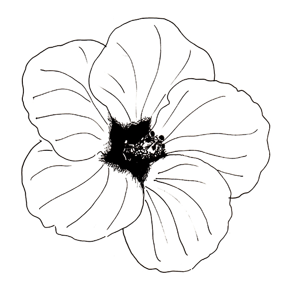 Hibiscus Black and White drawing by Ella Johnston ellasplace.co.uk