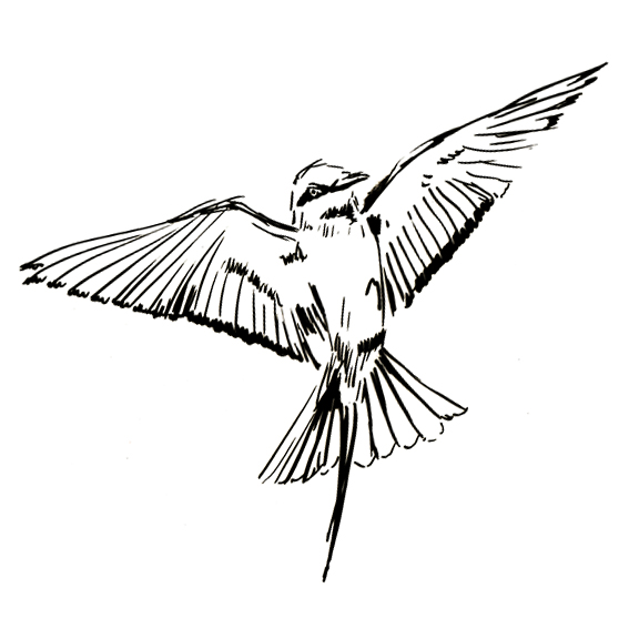Bee-Eater sketch (c) Ella Johnston