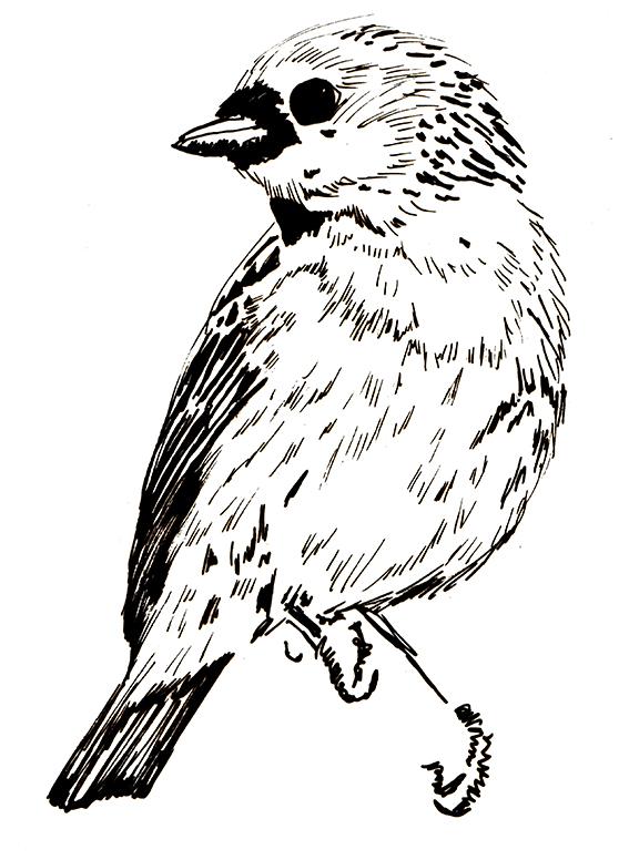 The Green-headed Tanager (c) Ella Johnston