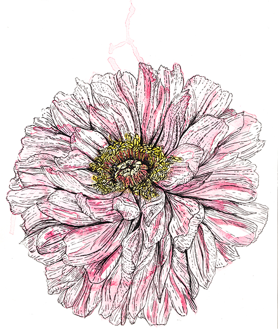Watercolour peony Ella Johnston