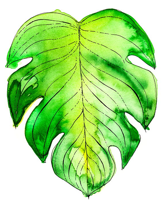 Leaves watercolour illustration Ella Johnston
