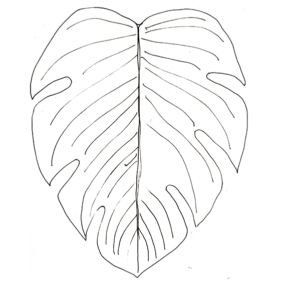 Leaves illustration Ella Johnston