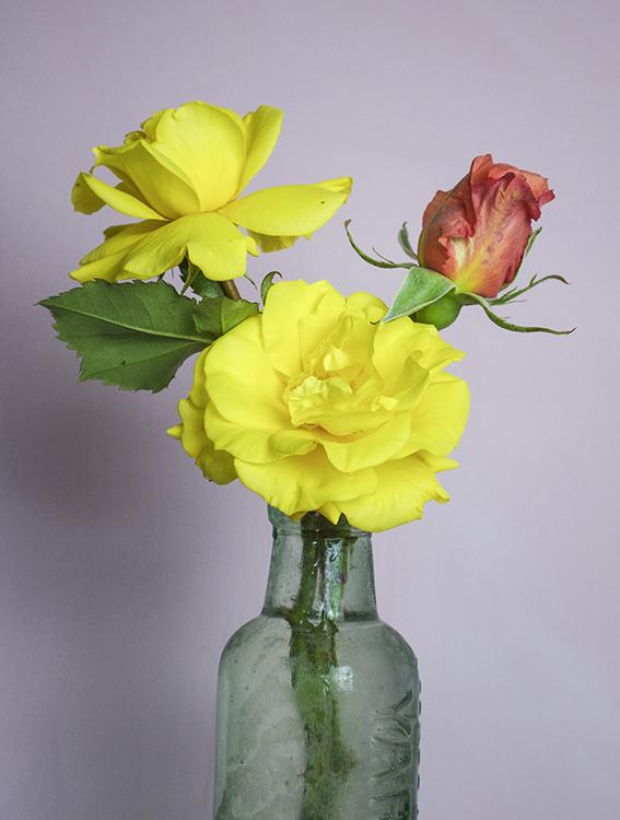 Yellow_3