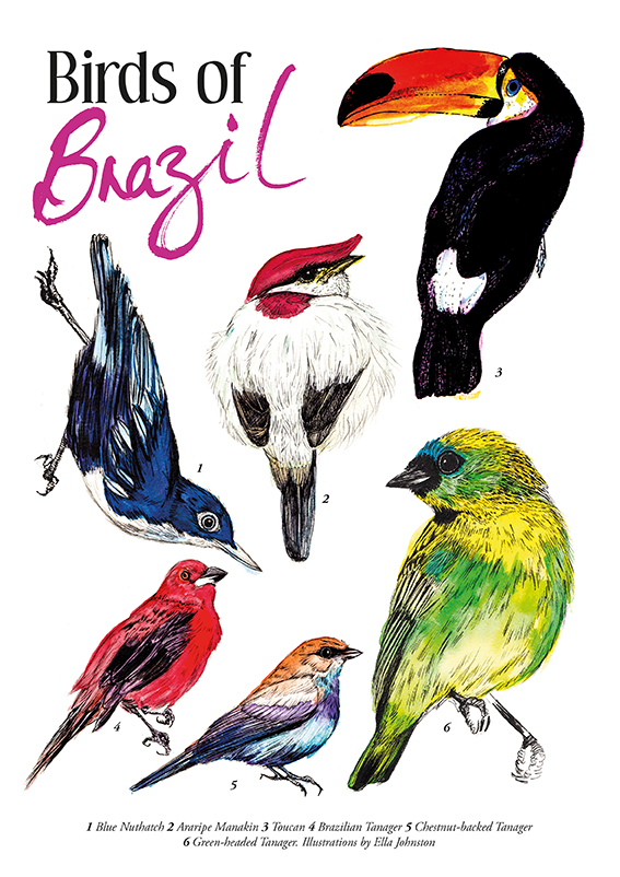 Birds of Brazil Ella Johnston ellasplace.co.uk
