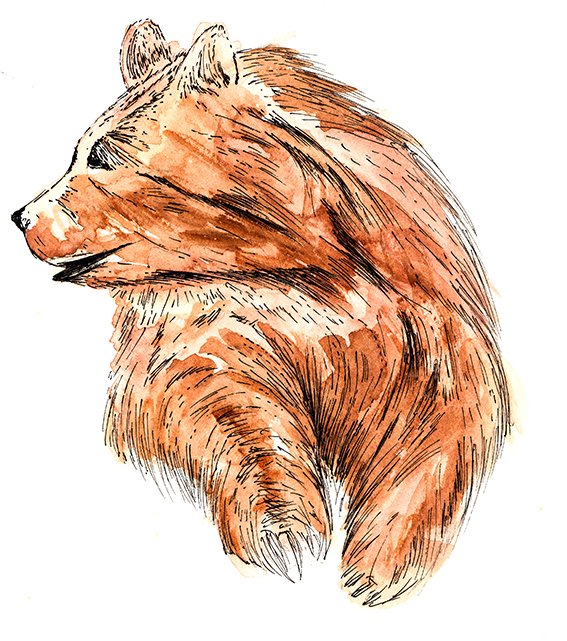 Bear Illustration by Ella Johnston