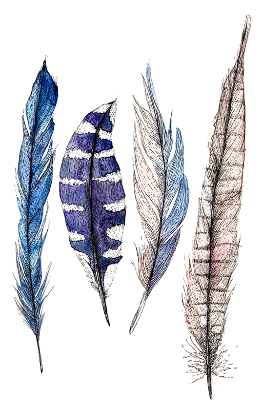 Feather illustration Ella Johnston