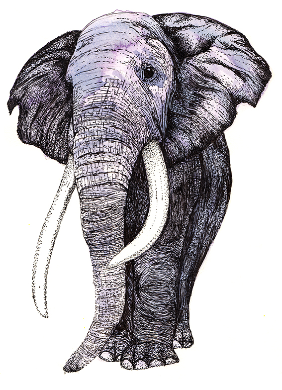 Elephant Illustration by Ella Johnston