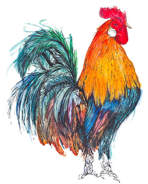 Rooster drawing/illustration (c) Ella Johnston