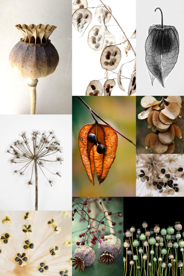Monday Moodboard Seed heads