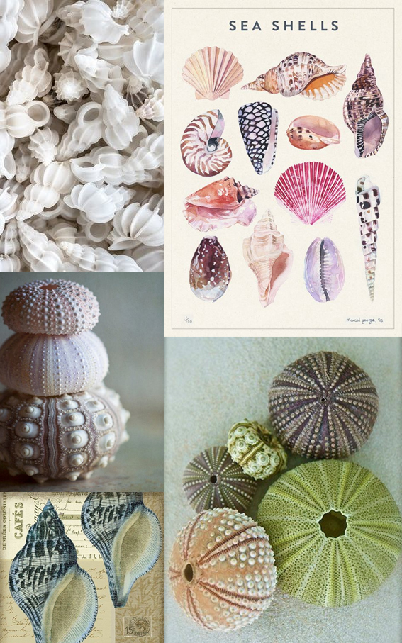 Seashells Monday Moodboard