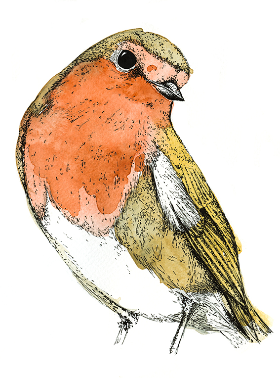 Robin Illustration (c) Ella Johnston