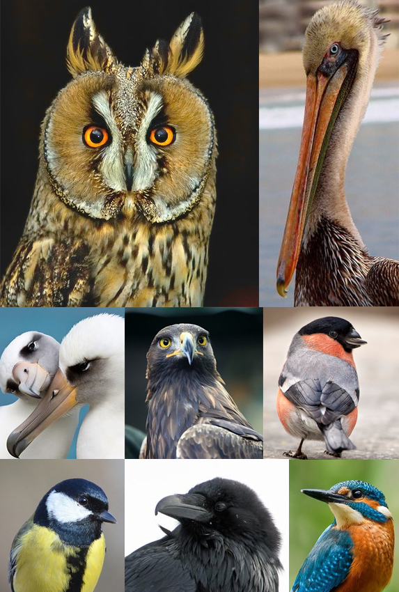 Monday Moodboard Birds