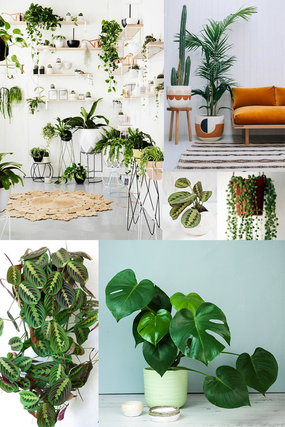 Monday Moodboard Houseplants ellasplace.co.uk