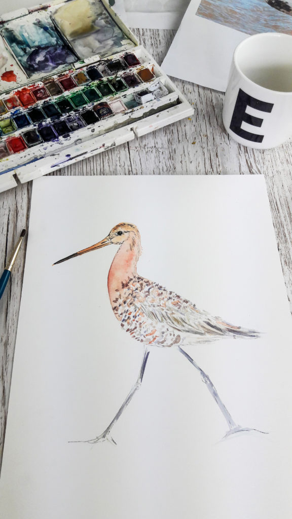 Work in Progress: Godwit watercolour and fine line illustration (c) Ella Johnston