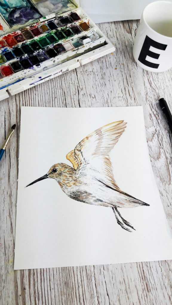 Work in progress: Flying dunlin watercolour and fine line drawing (c) Ella Johnston