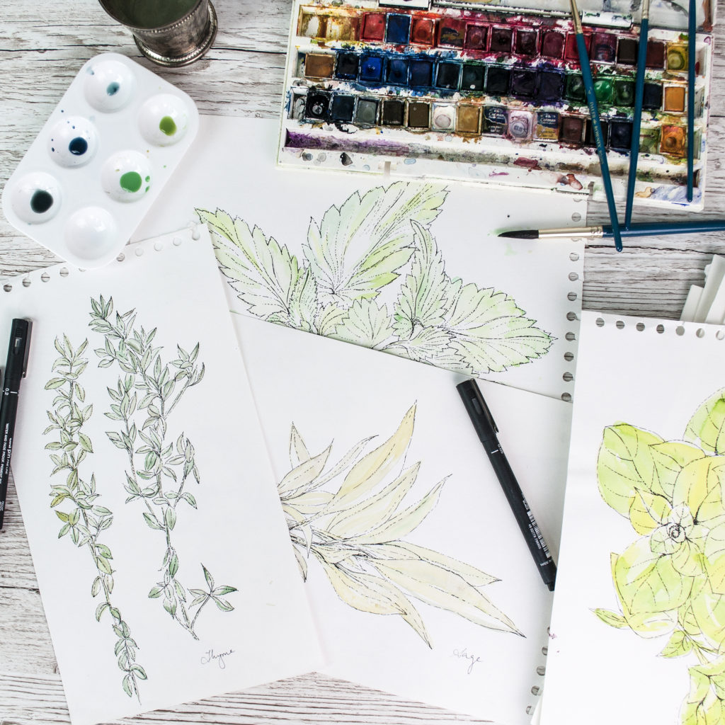 Work in progress: Garden herb watercolour illustrations for Homemaker Magazine