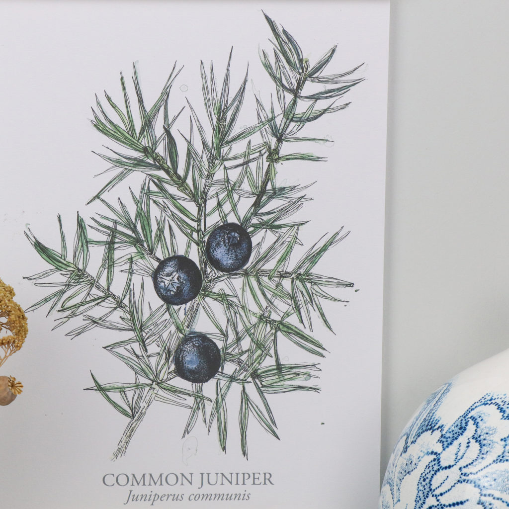 A3 Limited Edition Juniper Giclee Print (c) Ella Johnston