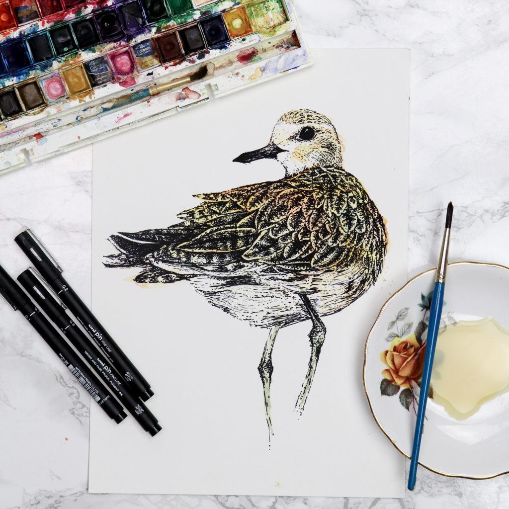 Golden Plover illustration work in progress (c) Ella Johnston