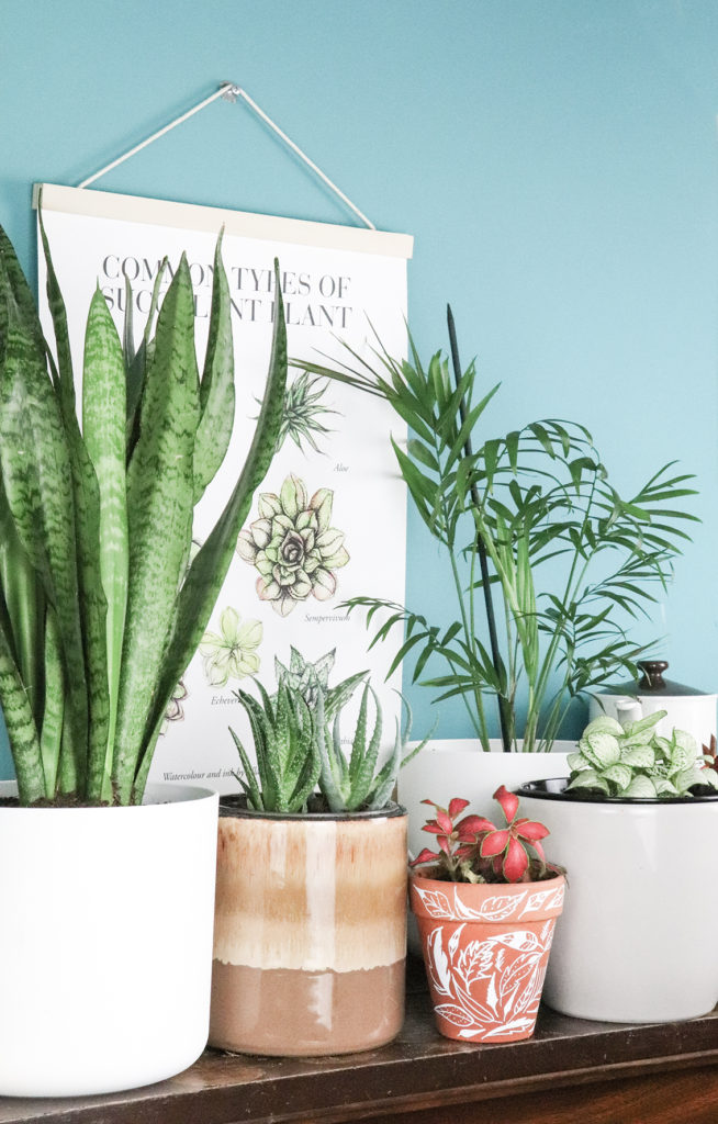 I love house plants. Photo (c): Ella Johnston