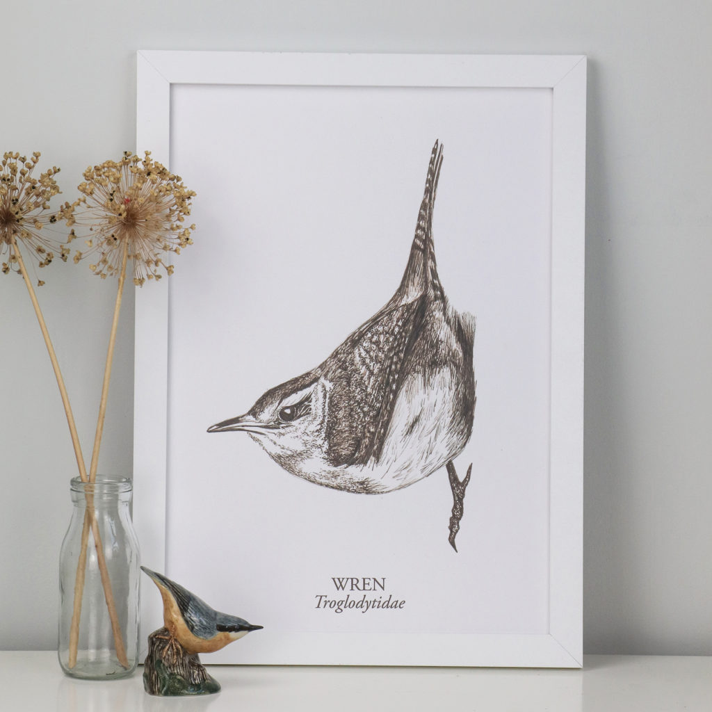 A3 Limited Edition Wren Giclee Print (c) Ella Johnston