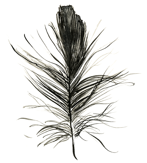 Ink feather drawing Ella Johnston