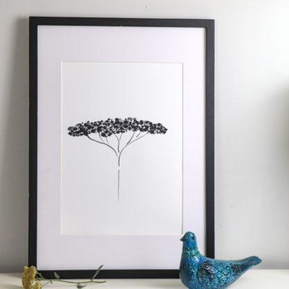 Black achillea A3 fine art print, Ella Johnston