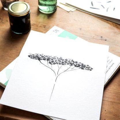 Black achillea A3 fine art print, Ella Johnston. work in progress