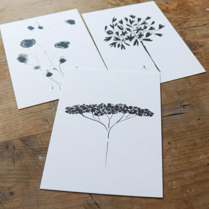 Black and white botanicals, illustrated postcard collection, Ella Johnston