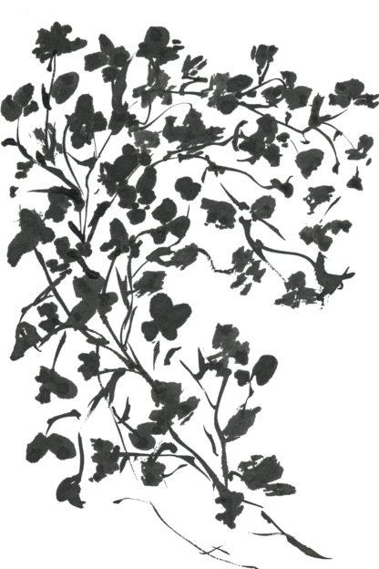 Black blossom, hand-painted postcard Ella Johnston