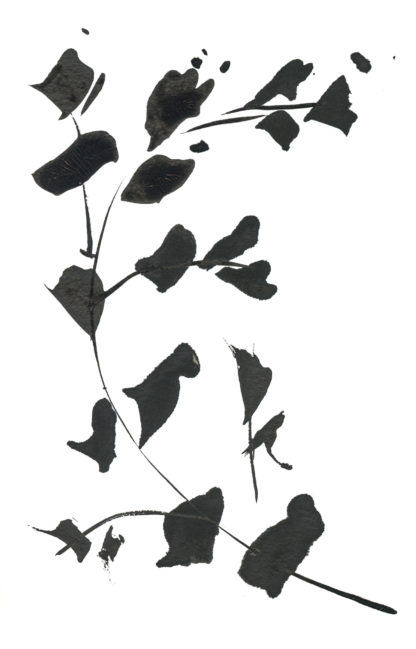 Eucalyptus ink sketch, hand-painted postcard Ella Johnston