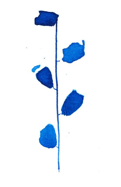 Blue buds, ink on paper. Ella Johnston